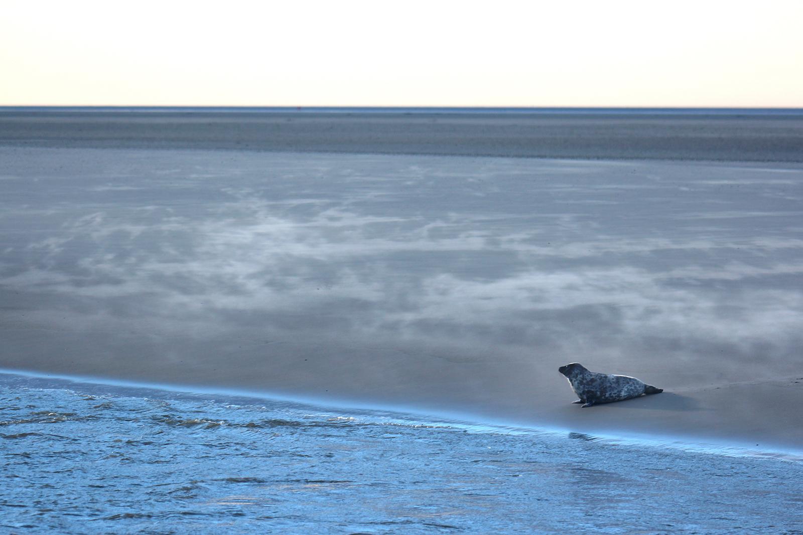 Ein einsamer Zeitgenosse, der da am Ende der Gezeiten im Dampf der Kälte zurückgeblieben war ...